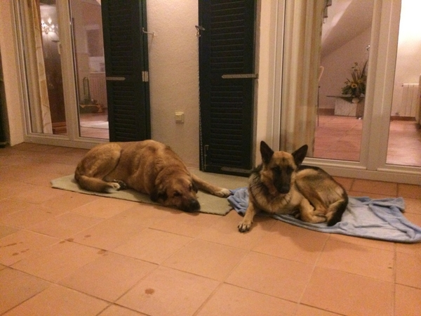 Beautiful house in Menorca, 2 dogs, 2 cats