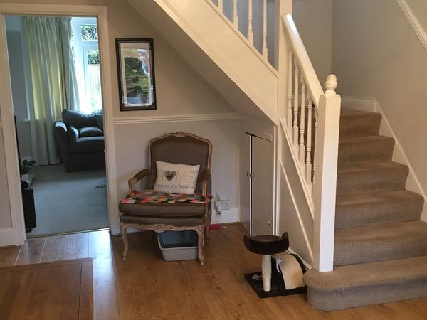 Dog requires company in lovely 4 bed detached house