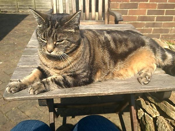 Pet sitter needed for my tabby cat for 1 week in Kidlington, Oxford