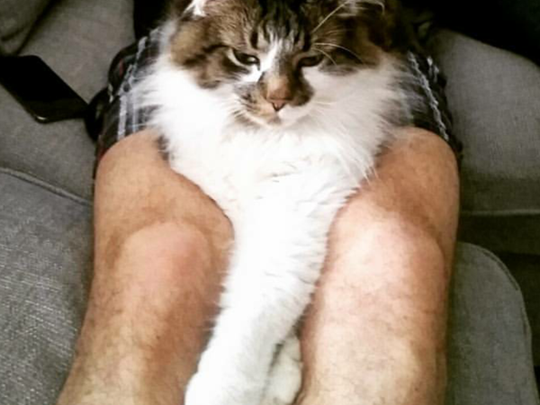 Cat sitter needed in London to look after our fluffball!