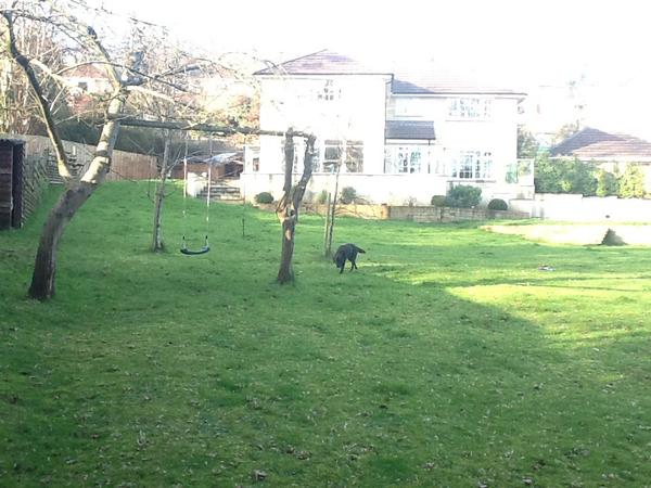 Housesitting assignment in Bath, United Kingdom