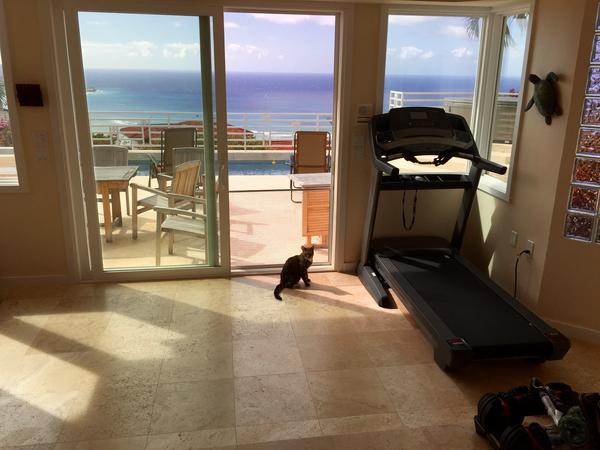 Cat lover house sitter wanted