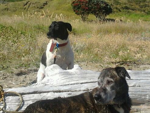 Dog Sitting Opportunities In Wellington New Zealand