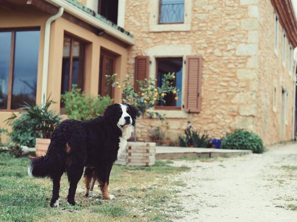 Housesitting assignment in Le Brouilh-Monbert, France
