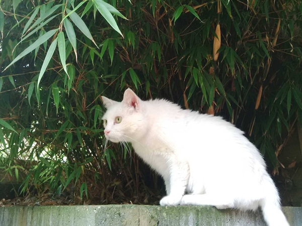 Caring sitter needed for Jude the large white cat and Heidi the feisty little cat.