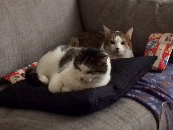 2 beautiful cats in a great part of London needing love & cuddles whilst we're away