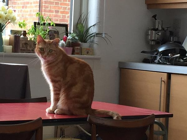 Responsible, Reliable and Kind Cat and Flat Sitter Needed