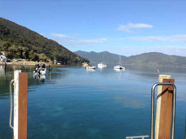 Housesitting assignment in Picton, New Zealand