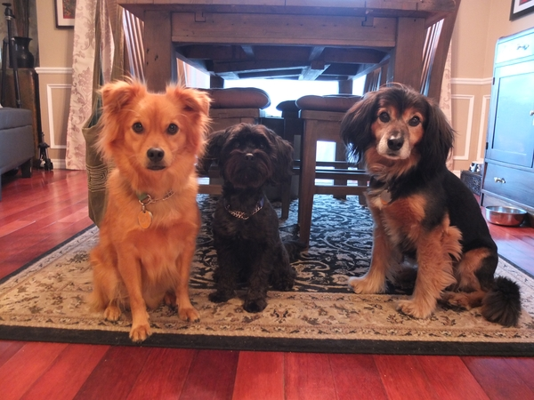 Home and 3 small dogs. British Columbia Canada