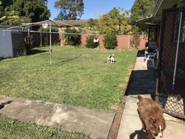 Housesitting assignment in Pendle Hills, NSW, Australia