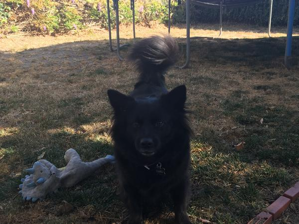 House sit for 1 Dog - Bay Area, CA