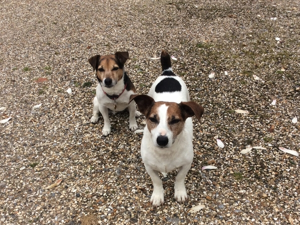 3 days/2 nights per week Jan, Feb, March - Housesit for 2 x jack russells and 2 x cockatiels
