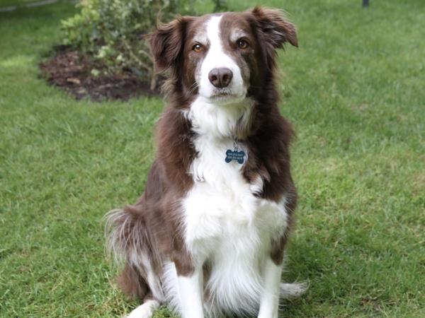 Dog sitter needed in beautiful Portland Oregon