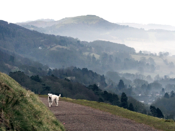 House and Dog Sitting in Beautiful Malvern Hills