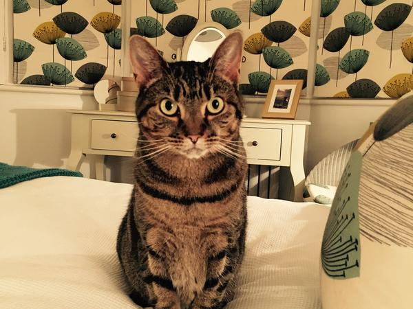 Friendly, reliable cat and house sitter needed for townhouse in cheltenham, UK