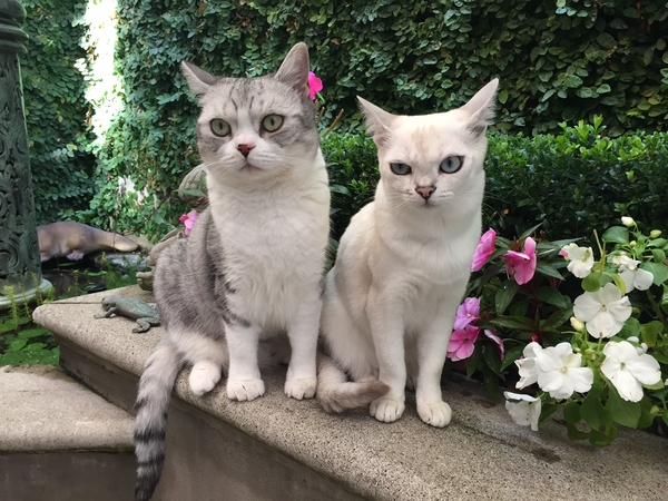 Adult house sitters wanted to look after 2 cats and home in July
