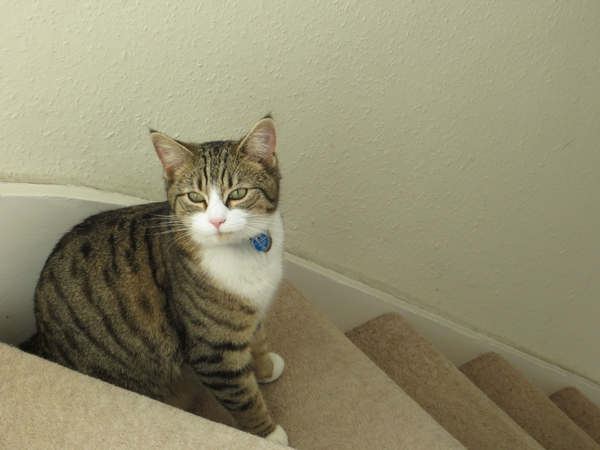 Pet sitters for cat in sunny Worthing