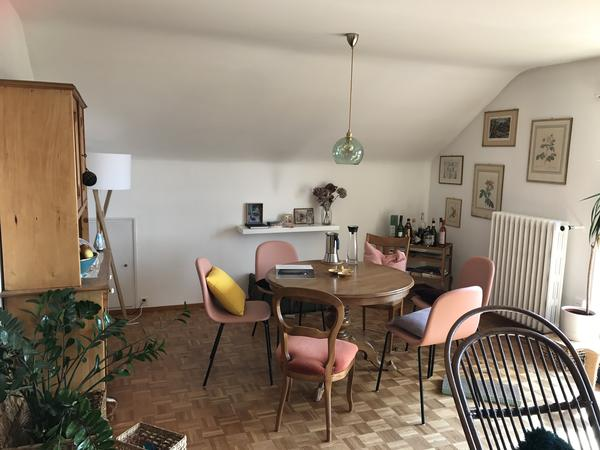 four cats in need of a babysitter - in exchange for staying in Zurich