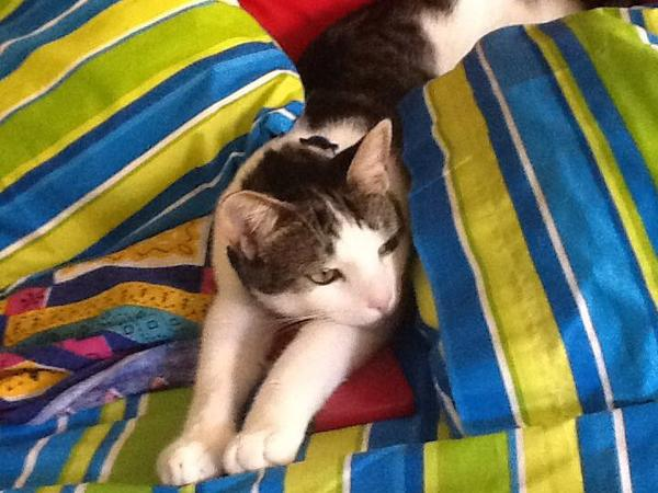 Home/Pet sitter needed for a 2 bedroom house in Wavell Heights - Brisbane. I have a cat Tuffy and a fish tank.