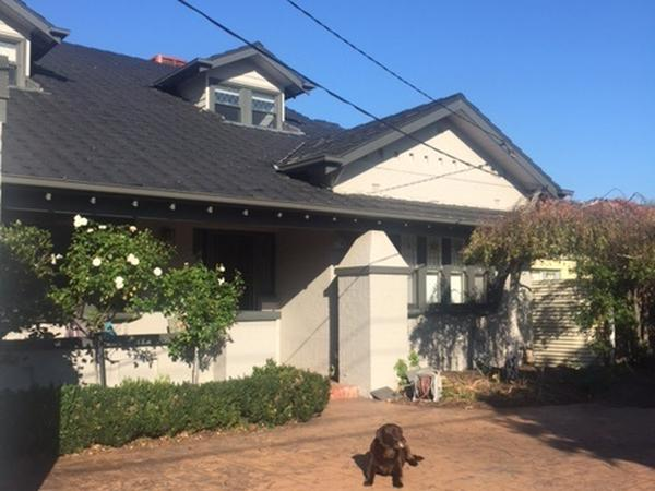 Housesitting assignment in Ormond, Victoria, Australia