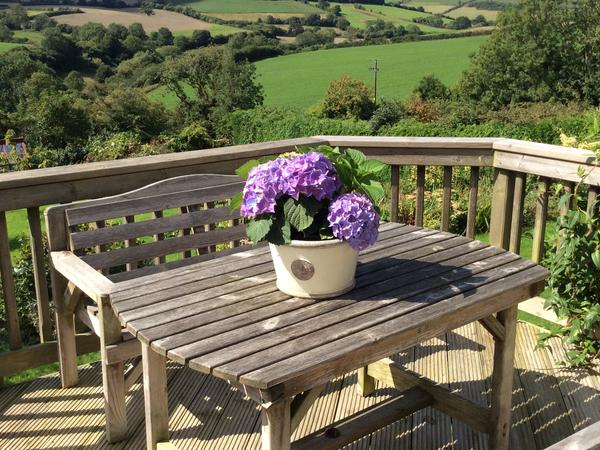 Dog and Kitten sitter required in beautiful village 7 miles south of Bath, Somerset.