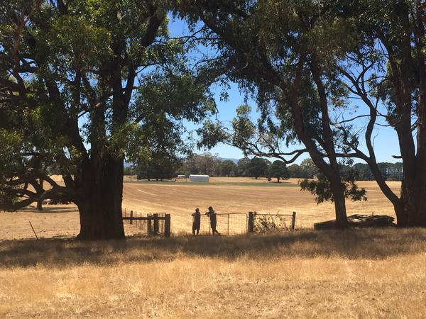 Relaxed country living on 70 acre farm near Kyneton  (1 hour from Melb CBD)