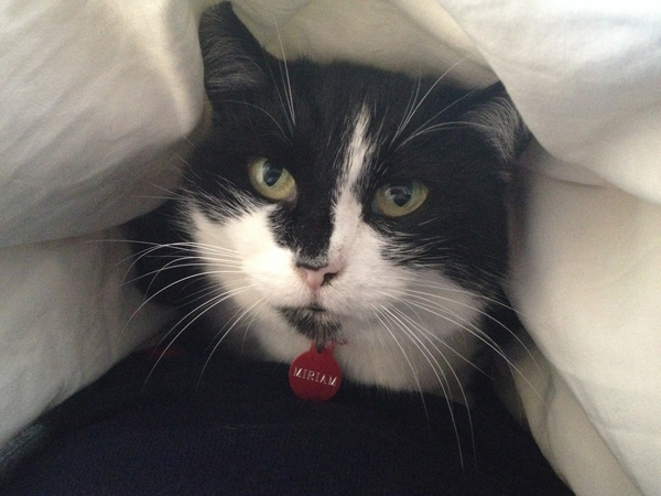 Pet Sitter needed for Miriam in 2 double bed house over Christmas - dates could be a little flexible