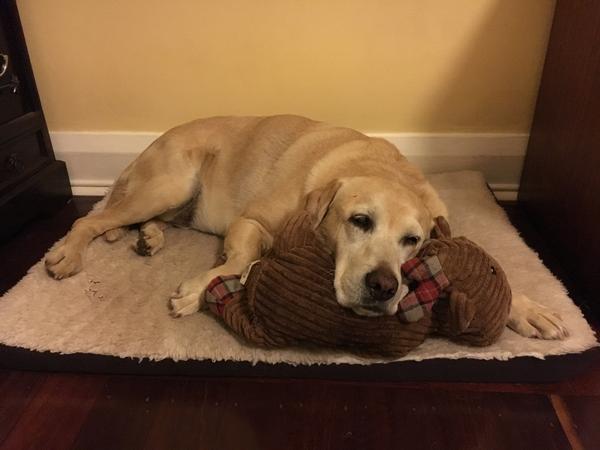 Pet sitter/house sitter
