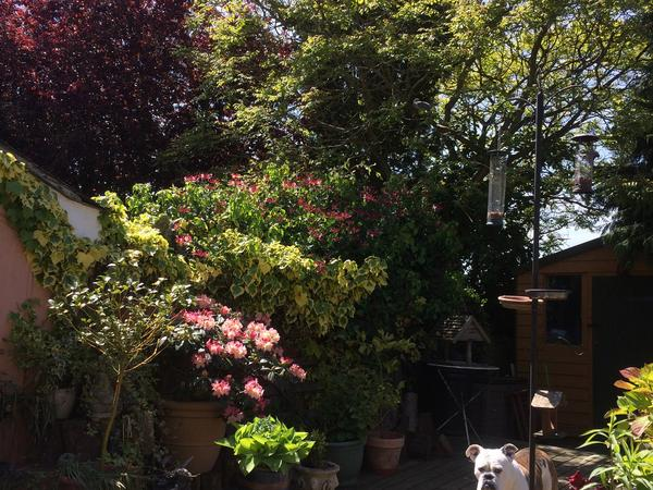 Housesitting assignment in Wethersfield, United Kingdom