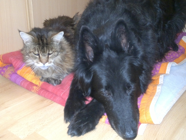 Pet sitter (couple), non-smoker, needed  for our 2 dogs and 1 cat in the South of France