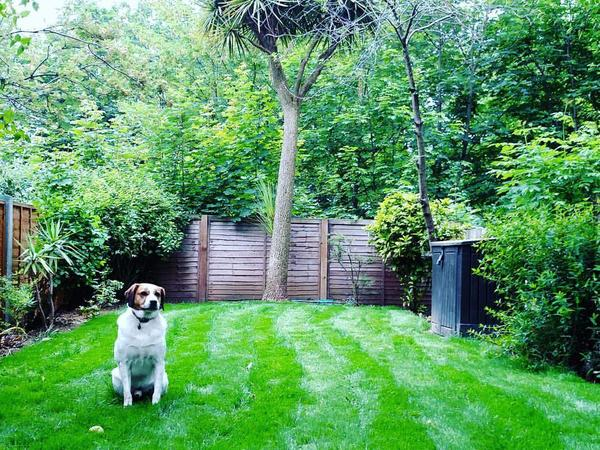Sitter for 3 bed with garden and lovely dog