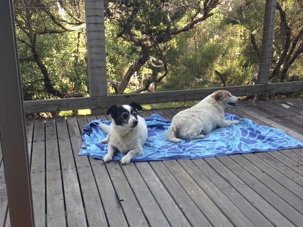 Pet/house sitter needed for 2 older Foxy-cross dogs, around 10 weeks, beach location,Victoria, Australia