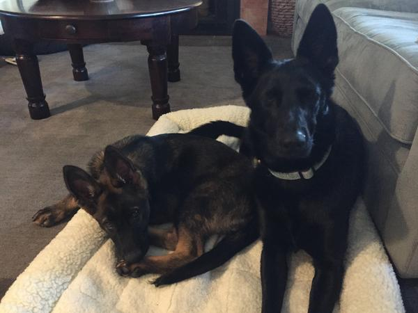 Housesitting assignment in Belmont, CA, United States
