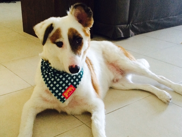 Easy going special needs dog in a studio apartment in Dubai!