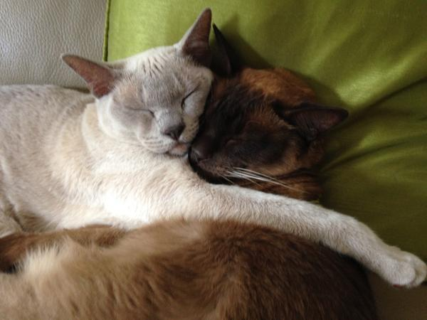 Furry Family looking to be lavished with love!