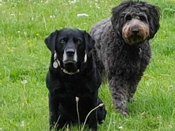 House sitters to walk and look after our loving dogs and comfortable house on the edge of the Cotswolds