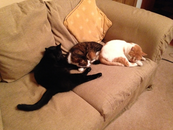 Cat and house sitter required for 3 nights in Lincolnshire
