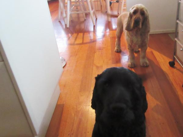 Housesitting assignment in Glen Waverley, Victoria, Australia