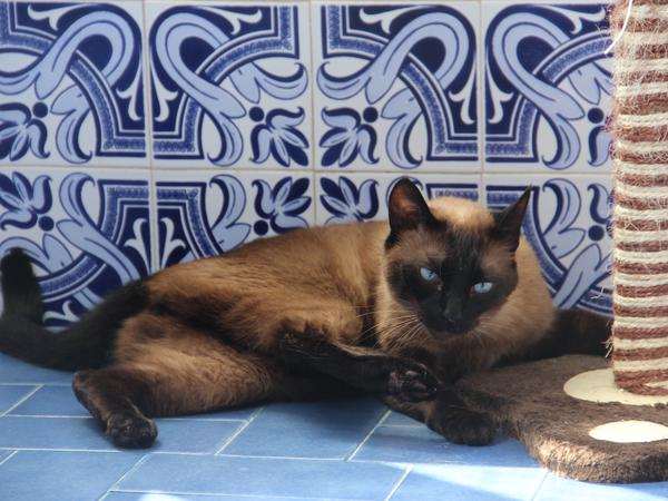 Housesitting assignment in Carcavelos, Portugal