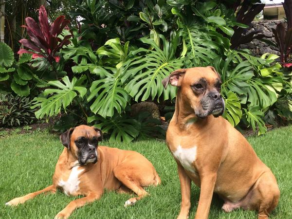Housesitting assignment in Kailua, Hawaii, United States