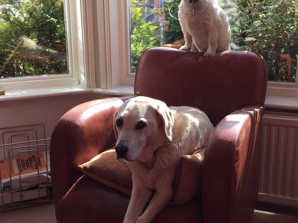 2 pooch house sit in Chorlton, Manchester