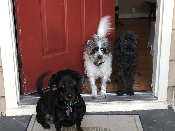 Pet Sitter Needed July 13-16