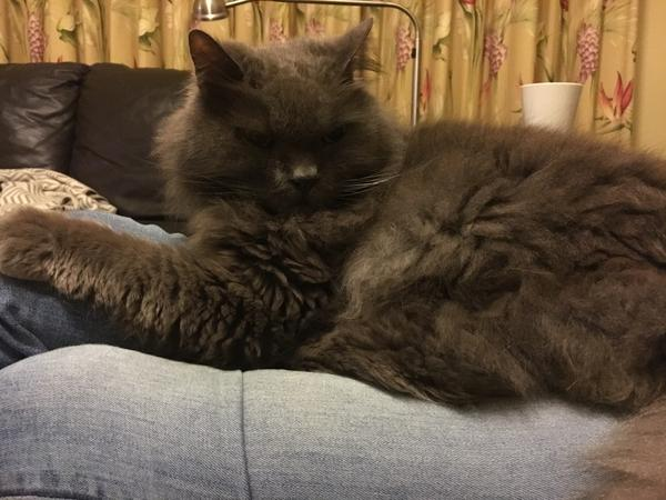 Housesitting assignment in Penshurst, New South Wales, Australia