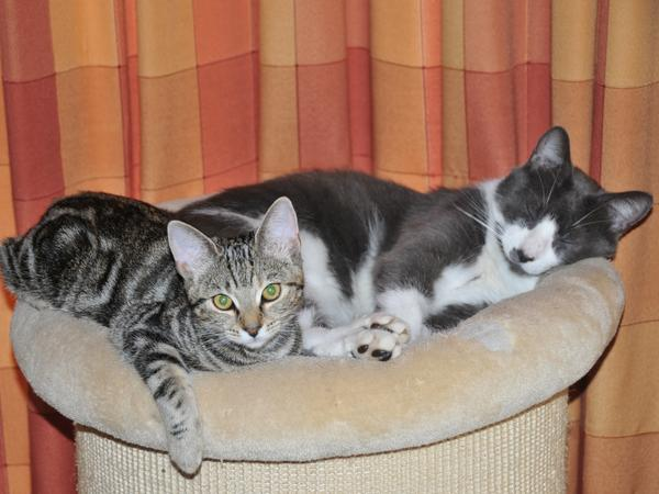 Cat/House Sitting- 2 adorable cats, large, detached house from 28th July to 11th August 2018