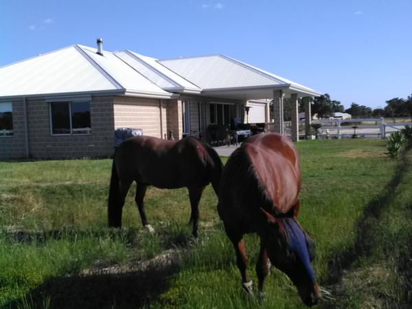 Housesitting assignment in Dardanup, Western Australia, Australia