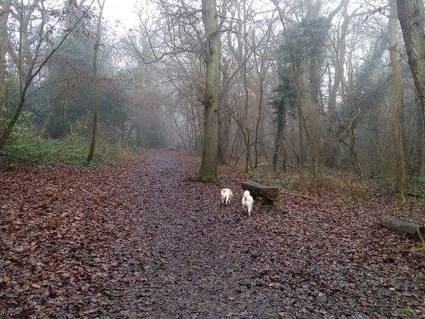 Housesitting assignment in Purley, United Kingdom