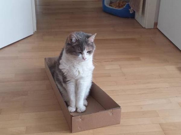 Cat-Sitter Needed
