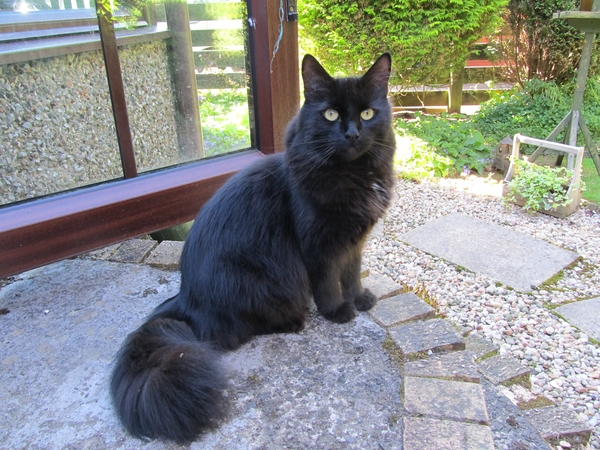 Cat lover required for 1 week in August of this year to spoil, pamper, groom and care for our 3 little cats.