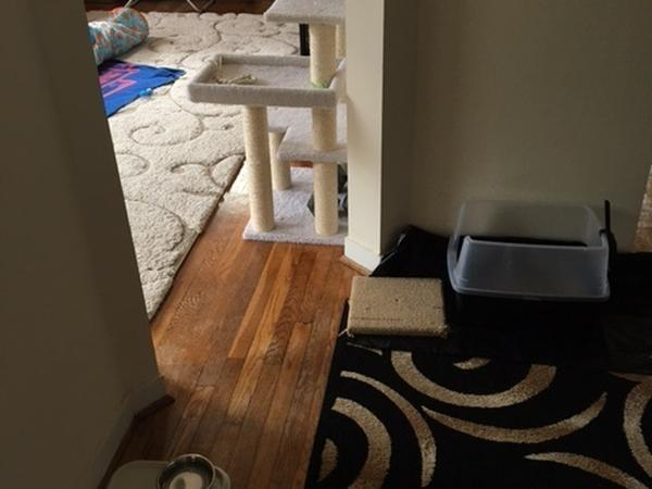 Cozy apartment in need of a cat lover close to Washington D.C.