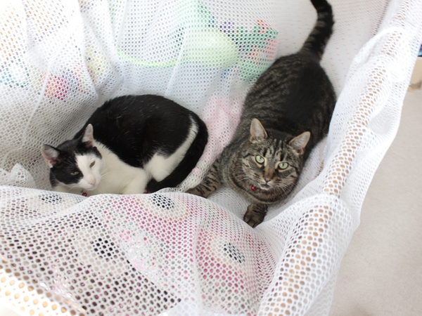 Looking for someone to take care of our two friendly cats for a week over the Aug bank holiday, in the West Sussex countryside.